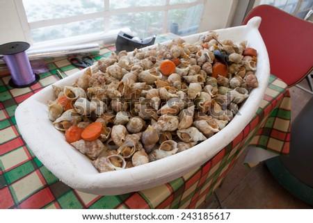 Slugs - stock photo