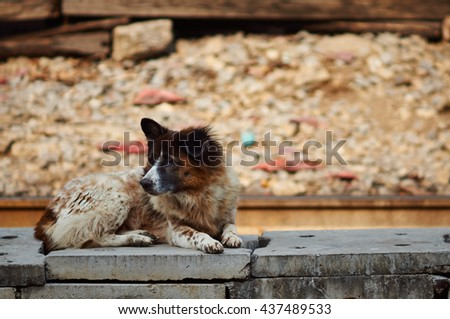 slum dog - stock photo