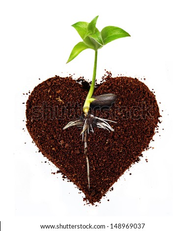 Small apple tree in ground heart shape with root. - stock photo
