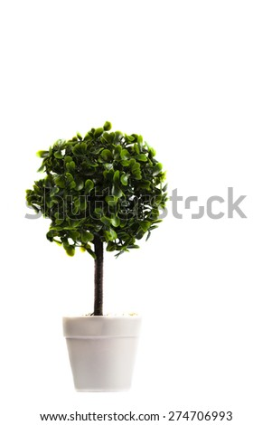 Potted tree stock photos images pictures shutterstock - Upright trees for small spaces concept ...