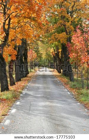 small avenue - stock photo