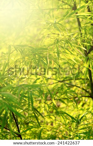 Small Bamboo Forest with Soft Light. - stock photo
