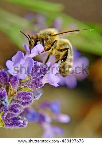 Small bee on a purple flower in the garden - stock photo