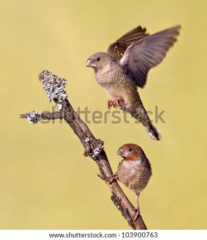 small bird flying - stock photo
