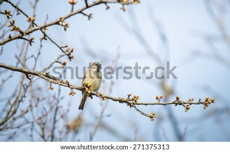 Small bird hanging on a tree branch during a cloudy spring day with buds opening up with the focus on the bird - stock photo