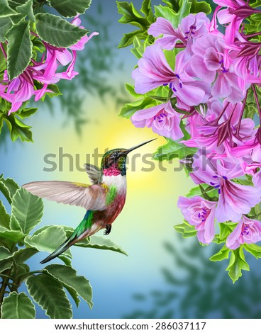 small bird hummingbird on a background of pink flowers and green leaves - stock photo