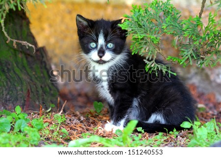 Small Black and White Kitty - stock photo