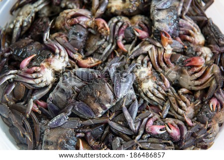 Small black crab for cooking food - stock photo