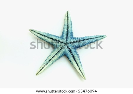 small blue starfish isolated on white - stock photo
