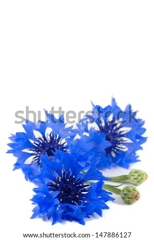 Small bouquet of beautiful vivid blue flowers of cornflower isolated on white background. - stock photo