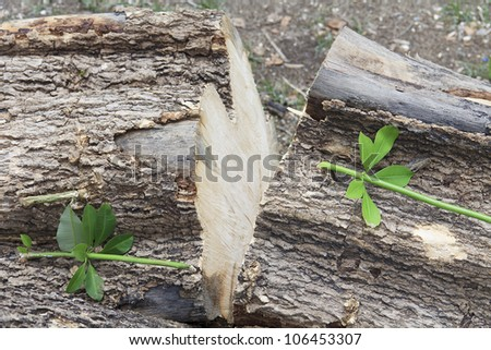 small branch germinate from a cut down log - stock photo