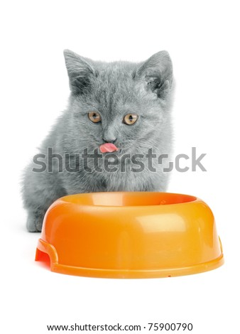 small british  kitten on the white background - stock photo