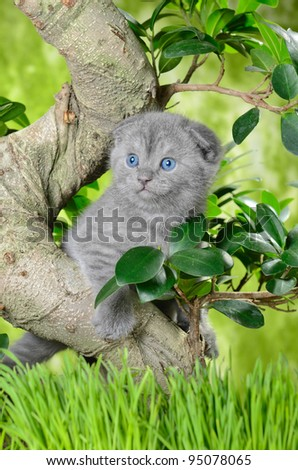 small british  kitten the age of 1 month in the grass - stock photo