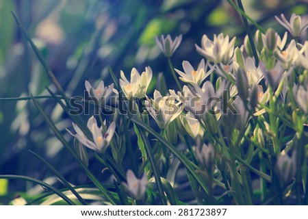 small bush elegant white garden flowers, tinted image - stock photo