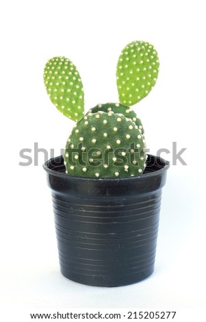 Small Cactus in black pot on white background - stock photo