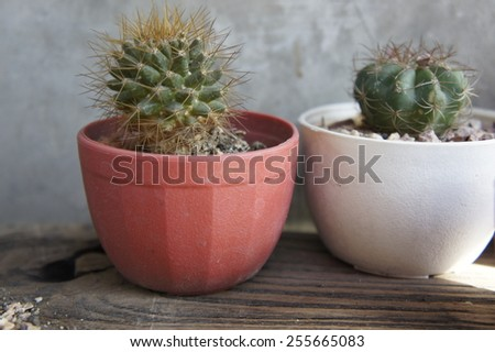 Small cactus in pot - stock photo