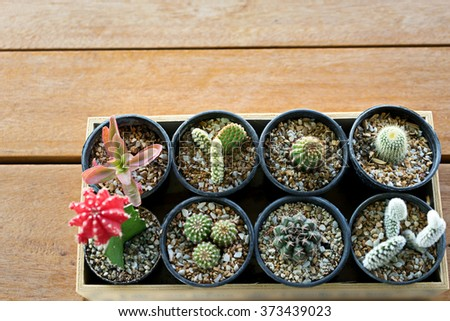 small cactus in pot on wood tray box - stock photo