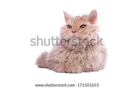 Small cat is isolated on a white background. - stock photo