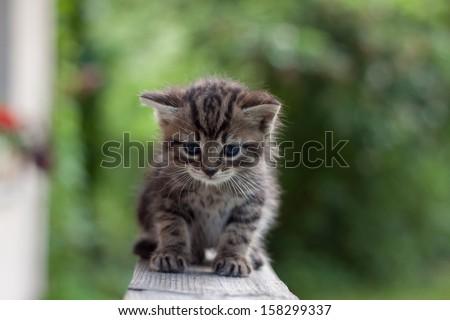 Small cat/Kitten - stock photo