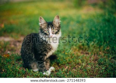 Small Cat Kitten Sitting On Green Spring Grass. Outdoor Portrait - stock photo