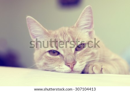 Small Cat (Vintage) - stock photo
