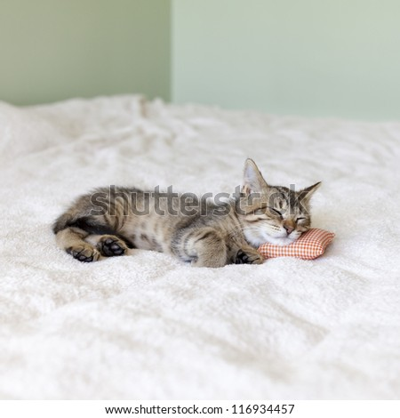 Small Cat With Pillow - stock photo