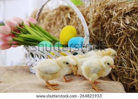 small chicken on a haystack, easter still life - stock photo