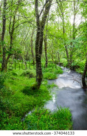 Small creek in a green forest seen in the Highlands of Scotland - stock photo