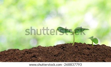 Small cucumber seedling over sunlight background - stock photo