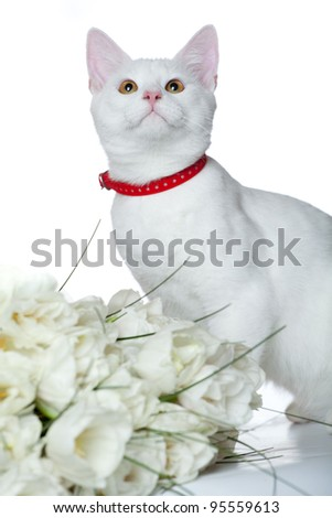 small cute cat isolated on white - stock photo