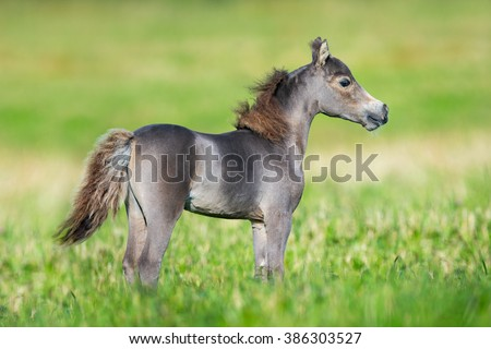 Small cute horse on green background - stock photo