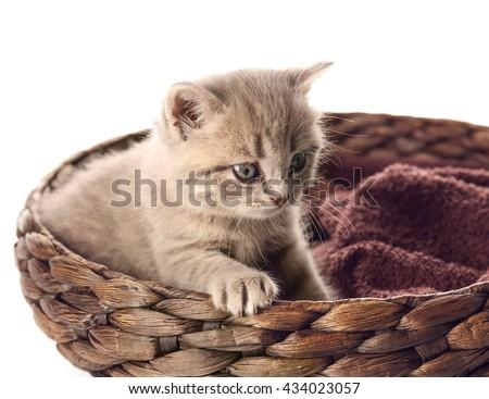 Small cute kitten in wicker basket - stock photo