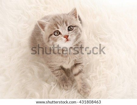 Small cute kitten on carpet - stock photo