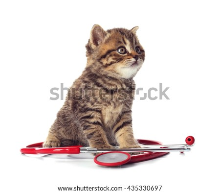 Small cute kitten with stethoscope, isolated on white - stock photo