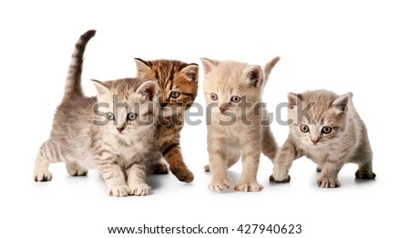 Small cute kittens, isolated on white - stock photo