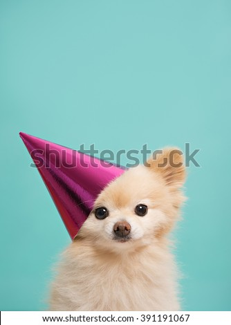 small cute puppy with pink hat at bright background - stock photo