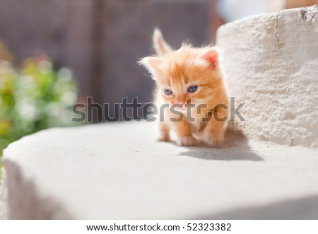 Small cute red kitten lit by sun - stock photo
