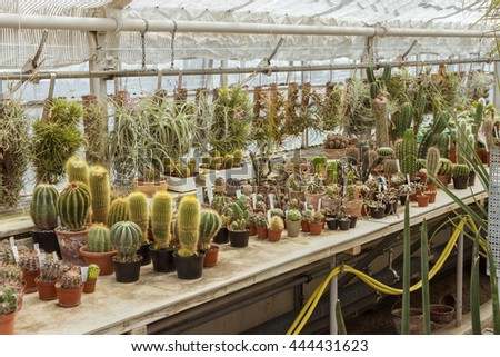 Small different types of cactus plants. Plantation house with different cactuses. Row of many cactus in pots. Lot of green succulents on wooden table. Various sizes and appearances. Diversity, variety - stock photo