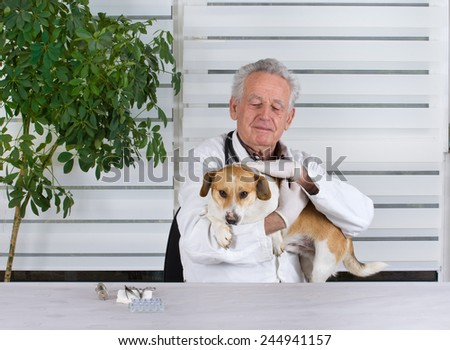 Small dog has examination on table in senior veterinarian infirmary  - stock photo