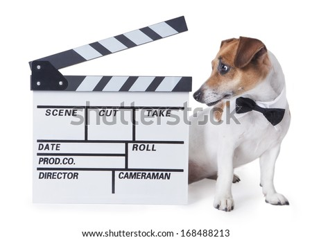 Small dog with a black bow tie and shirt collar with interest looks aside for a movie Clapperboard. White background. studio shot - stock photo
