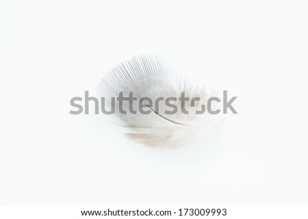 Small down feather close up - stock photo