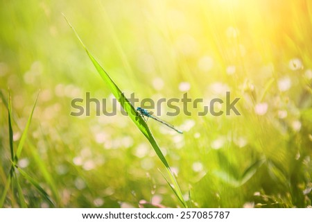 Small dragonfly on the green grass in the field. Macro image with small depth of field - stock photo