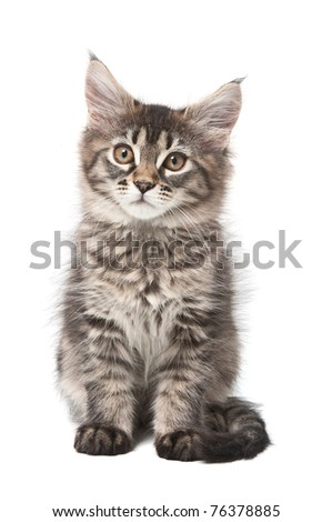 Small fluffy kitten looking in a camera - stock photo