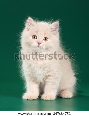 Small fluffy kitten on a green background - stock photo