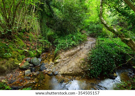Small forest stream in a green hazel and oak forest in Brittany, France - stock photo