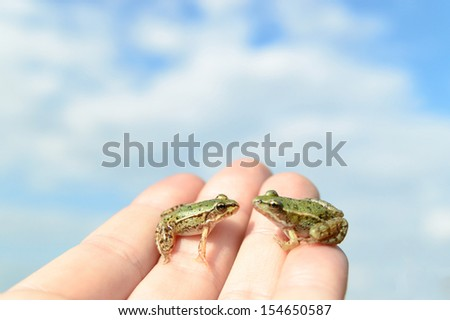 small frog rescued from a busy road on hand as a background, nature series - stock photo