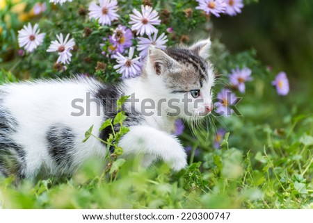 Small funny kitten in pink  flowers - stock photo