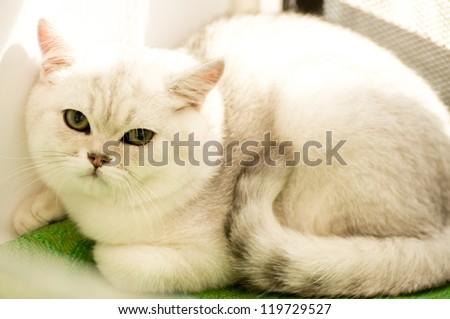 Small funny white kitten - stock photo