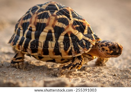 Small golden turtle on sand - stock photo