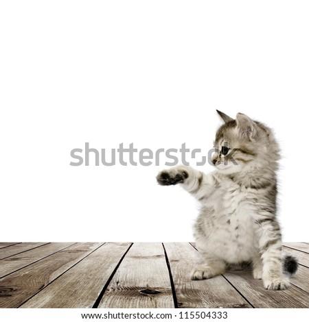 Small gray kitten on wood floor over white background - stock photo